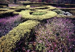 Yuni garden (threepinner) Tags: mamiya japan 50mm iso100 hokkaido 北海道 日本 universal positive press yuni f63 hokkaidou selfdeveloped northernjapan sekor yunigarden 由仁町 ゆにガーデン 北日本