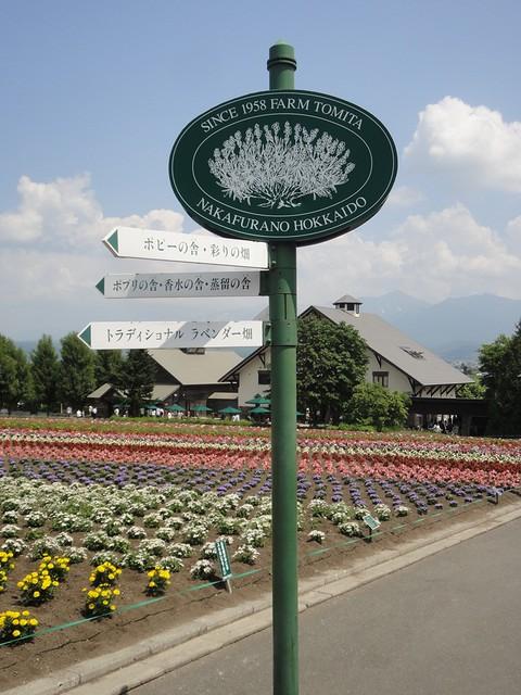 北海道は富良野のファーム富田でラベンダー畑や花畑を堪能の写真