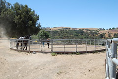 "Training in a Round Pen • <a style=""font-size:0.8em;"" href=""https://www.flickr.com/photos/92793179@N08/9304737214/"" target=""_blank"">View on Flickr</a>"