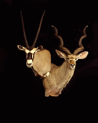 "Animal Art Taxidermy - Africa • <a style=""font-size:0.8em;"" href=""http://www.flickr.com/photos/27376150@N03/9353748372/"" target=""_blank"">View on Flickr</a>"