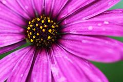 Polen a Fondo (José Ramón de Lothlórien) Tags: flowers plants flores macro verde hoja hojas flora plantas jr shamrocks shamrock follaje gree botones malbon trebol producciones capollo treboes