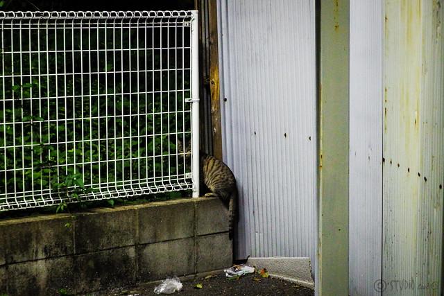 Today's Cat@2013-10-02