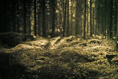 Forest (netzanette) Tags: forest 50mm nikon sweden bokeh d600 nikond600 vision:night=051
