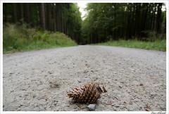 Auf dem Weg zur Teufelskanzel (schmilar77) Tags: nature forest landscape path natur landschaft wald weg tannenzapfen fircone 1870 eichsfeld teufelskanzel afsdxnikkor1870mmf3545gedif