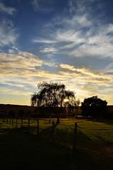 Soleil Couchant (Smoke It 000) Tags: autumn sunset sky cloud sun france nature clouds automne soleil ciel prairie nuage paysage arbre contrejour coucherdesoleil branche sarthe paysdelaloire chne d5100