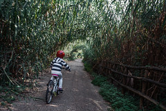 dalla-bici-2 (Sebastiano Pupillo) Tags: rome roma bike bici bikelane bicicletta montesacro fromthebike