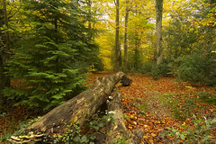 LOGGING ON... (mark_rutley) Tags: autumn trees color tree fall leaves log colours hampshire fungi fareham wickham forestofbere
