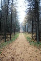 Walk it back (Marie Granelli) Tags: road november autumn tree skne sweden explore sdersltt d3000