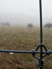 The Fog, the Fence, the Web and the Buffalo (David Hoffman '41) Tags: morning autumn food mist nature water metal fog rural fence design virginia spider drops buffalo scenery mood quiet natural patterns web country farming twist knot symmetry pearls dew agriculture bison herd redoak grazing hump indistinct charlottecounty platinumheartaward