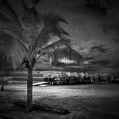 nipa hut (sirman88) Tags: blue light bw panorama motion beach architecture interestingness cityscape coconut dusk geometry glorious hut malaysia slowshutter pointing urbanjungle f8 masjid verticalpanorama goldcoast revisited traveldestinations colorimage buildingexterior d7000 treeblackwhite sirman photographyoutdoors azmanrahman sirman88 vertoramatokina1116