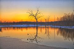 Brrrrr (Kansas Poetry (Patrick)) Tags: winter tree ice lawrencekansas clintonlake patrickemerson patricklovesnancy