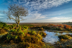 Longslade Bottom Sunrise - New Forest (Christopher Pope Photography) Tags: trees mist lake water misty landscape dawn golden countryside gallery sony hampshire fields colourful newforest lanscape singletree goldenhour 2014 greatsky grrass countrysidesunset sonynex5n