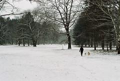 Tiergarten (I) (~ AdriaN ~) Tags: snow color nature germany pentax k1000 nieve alemania tiergarten analgico berln