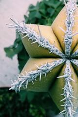 (dave in the world) Tags: cactus naturaleza plant verde green planta nature forest cacti garden bosque leafs spikes espinas flickrandroidapp:filter=none