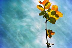 Regeneration (Karen Kleis) Tags: leaves photomanipulation spring digitalart hypothetical twop newgrowth vividimagination artdigital arteffects sharingart awardtree arttate netartii