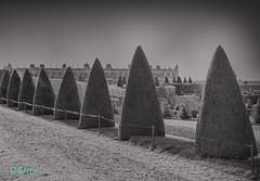 Ambiance 2- Parc du chateau de Versailles (bernard78br) Tags: france canon eos ledefrance versailles iledefrance 6d chateaudeversailles 24105mm castleofversailles eos6d lightroom5 objectifsreflex