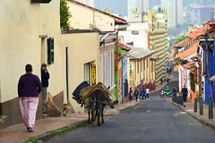 Donkey lady (jan lyall) Tags: street woman donkey farmer candelaria bogata
