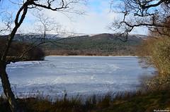 Loch Kinord - Frozen (LynG67) Tags: winter scotland aberdeenshire january lochkinord