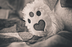 Week 7: Heart (46.365) (Shane Montross) Tags: paw heart daughter buddy day46 feat day46365 365the2015edition 3652015 15feb15