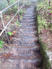 Blue Mountains - Wet Stair Case (simonevanbergen) Tags: trees mountains water fog forest train waterfall rainforest ride path walk sydney australia bluemountains katoomba leura svb 2015 simonevanbergen