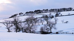 Skeletons (Blue Pelican) Tags: trees winter snow derbyshire hill glossop