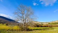 Chteauneuf Val Saint Donat dans les Alpes de Haute Provence ... (Pascal Duvet) Tags: panorama nature saint alpes 04 hiver val provence pascal paysage campagne arbre vue duvet haute donat chteauneuf