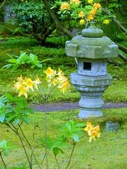 Japanese Garden-024 (Quetzalcoatl002) Tags: flowers garden japanesegarden estate denhaag zen horticulture stillness thehague clingendael landgoed