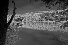 Nockamixon State Park Quarry Trail DSC1495 BW (dweible1109) Tags: reflection spring nikon state pa infrared treeline penna nockamixon nockamixonstatepark pastateparks nockamixonlake d5100