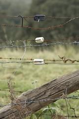 Insulators (daniel_james) Tags: rural fence farm australia nsw barbedwire bentley electricfence northcoast 2016 northernrivers tamron60mmmacro