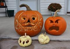 The week after (spotboslow) Tags: halloween pumpkin pumpkins jackolantern watertown massachusetts