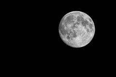 20/52 - Landscape: Nightowl (Bright Side of the Moon) (Ben Aerssen) Tags: sky blackandwhite bw moon white black texture monochrome night dark grey space gray crater nik minimalism lunar waxinggibbous dogwood52 dogwoodweek20