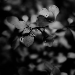 Thicket Details 007 (noahbw) Tags: light shadow summer blackandwhite bw sunlight abstract blur monochrome leaves forest square landscape blackwhite woods nikon dof natural bokeh dreamy dreamlike d5000 brownfamilyenvironmentalcenter noahbw