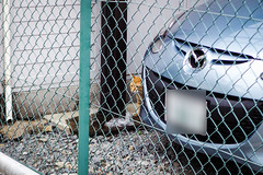 Today's Cat@2016-05-29 (masatsu) Tags: cat pentax catspotting mx1 thebiggestgroupwithonlycats
