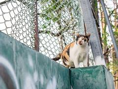P4085758 (daisuke1230) Tags: cat olympus neko em  m43