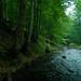 Nergănița Stream, Izvoarele Nerei old-growth forest, Semenic Mountains National Park, Romania