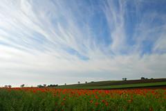 La saison des coquelicots (Croc'odile67) Tags: red sky cloud nature landscape rouge nikon contemporary sigma ciel nuages paysage coquelicots d3200 pavots 18200dcoshsmc