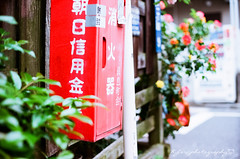 () Tags: rose japan 50mm fuji kodak bokeh f14 olympus m42 fujifilm 100 autos om fujica st705 fujicast705 50mmf14 ektar filmphotography gzuiko   omsystem   kodakektar100 ektar100 olympusomgzuikoautos50mmf14
