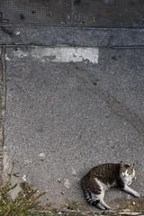 marseille (monsieur ours) Tags: marseille france ville city rue street urban urbain outside extrieur couleur color cat chat animal