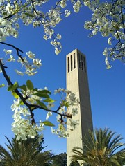 Storke Tower (toranosuke) Tags: storketower plumblossoms