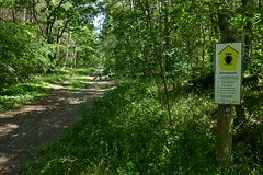 Mritz Nationalpark (Photodesaster) Tags: naitionalpark mritz trees road nature