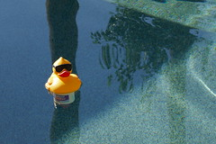 Pool duck Scottsdale AZ (artistwhite) Tags: blue water pool duck cool with floating