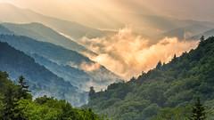 A foggy morning in Smoky Mountain (Hongyu Guo) Tags: wood trees mist fog sunrise landscape gold smokymountain