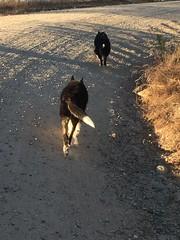 Travelling Wolf Style (rondodog) Tags: oakhurst 2016 july tay tass