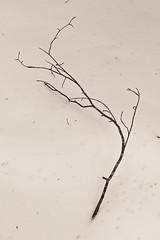 Vercors, 2016 (Olivier BERTRAND) Tags: trees winter blackandwhite snow nature monochrome forest canon landscape 50mm woods noiretblanc hiver naturallight neige dslr paysage vercors arbre fort digitalphotography blackandwhitephotography canonef50mmf14usm isre canonlens 50mmcanon olivierbertrand canon5dmark2