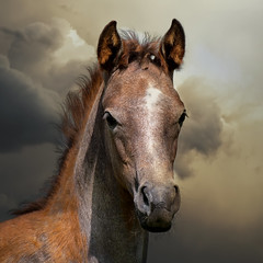 Showdown in the sky (FocusPocus Photography) Tags: sky horse weather animal clouds himmel wolken arab arabian drama pferd wetter tier foal fohlen araber marbach araberfohlen araberpferd hauptundlandgestt