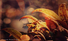 micro ambiente (ojoadicto) Tags: nature naturaleza bokeh calida warmcolors hojas leaves artisticphotography