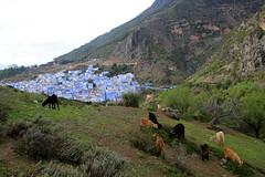 IMG_3981 (rachel_salay) Tags: blue morocco chefchaouen