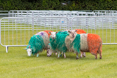 cricket_2015-53.jpg (Fingal County Council) Tags: fingal newbridgehouse flavours donabate pwp flavoursoffingal fingalcoco fingalcountycouncil