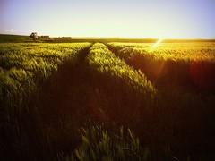 Jump into that field! (Fotogaaf Amanda) Tags: sunset sun colour barley zonsondergang view uitzicht lanscape gerst