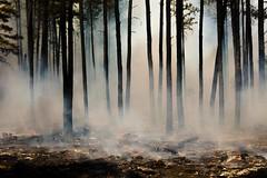 20160615-FS-UNK-0005 (USDAgov) Tags: fire us az whiteriver wildfire cedarfire